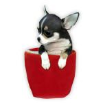 vendita cuccioli chihuahua toy