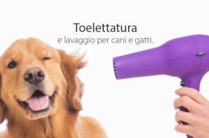 toelettatura cani milano