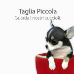 Cani Taglia Piccola