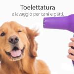 toelettatura lavaggio cani gatti milano