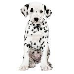 vendita cuccioli dalmata
