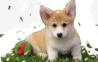Cane Cani e Cuccioli